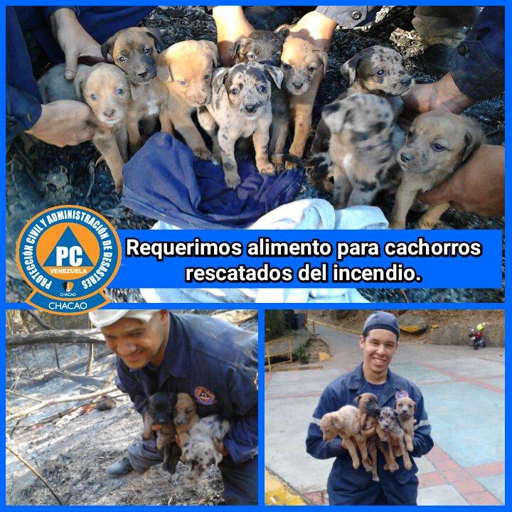 #URGENTE RT @PC_Chacao: Requerimos alimento y hogar para estos 9 cachorros rescatados hoy del incendio del  Ávila https://t.co/W3eFUxtvBX