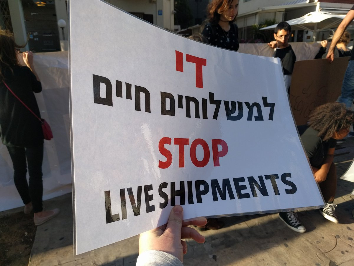 #vegan #activism in #TelAviv. We urge @EL_AL_ISRAEL to stop flying calves to Israel. Ban live shipments! https://t.co/fhkRWHqmVz