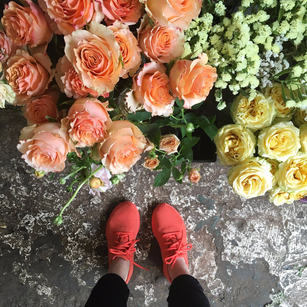 Kea Red color. #weareallbirds https