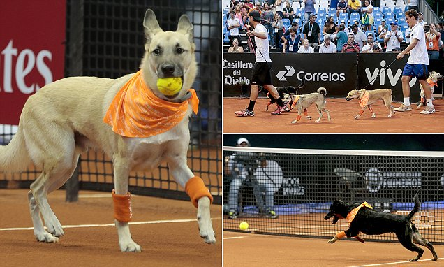 "Trained shelter dogs take center stage at Brazil tennis open as ""ball dogs"" https://t.co/96Btze0CGN https://t.co/wiMNwKY14j"