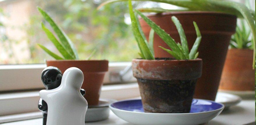 Aloe vera anche per conservare la frutta
