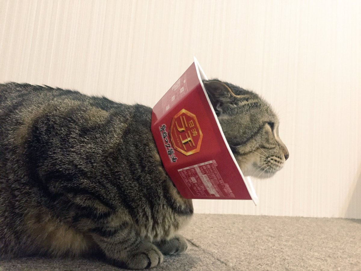耳を強く掻いてしまうので日清ラ王でエリザベスカラー作ってみた。百獣のラ王になれたね( ^ω^ ) pic.twitter.com/3OGbHIpMGM