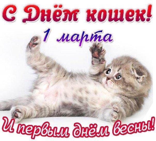 Открыток, прикольные картинки с днем кошек