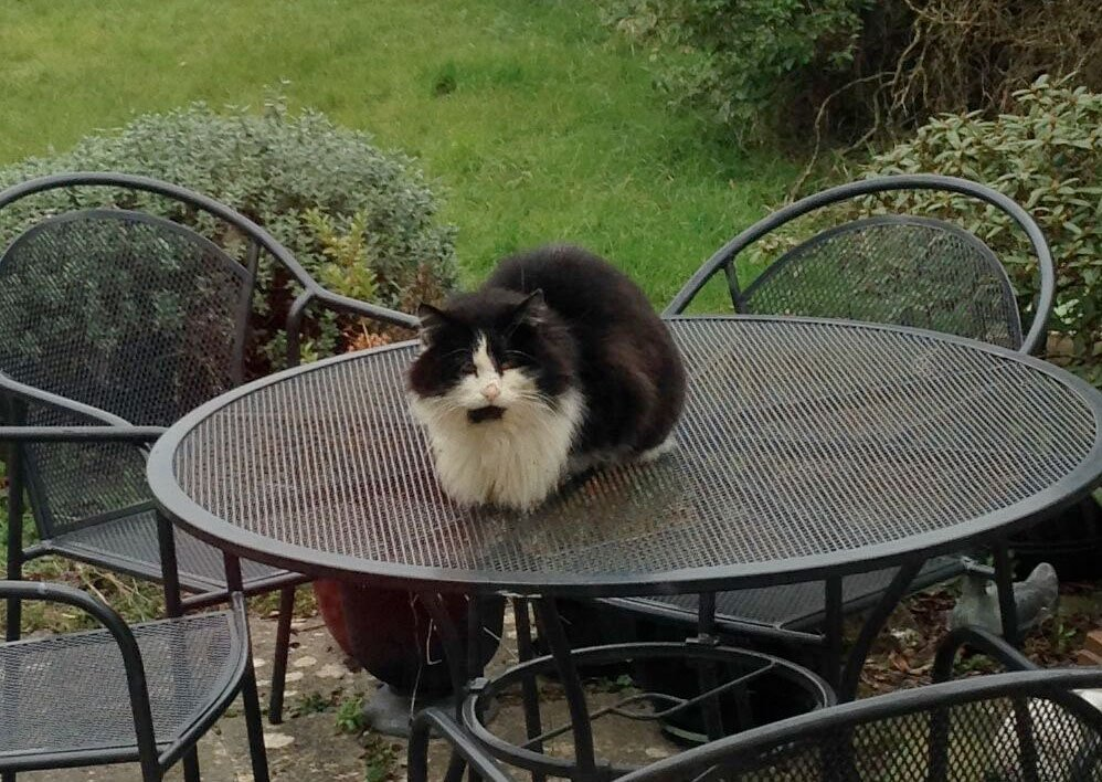 Is anyone in the Southdown area missing this furry specimen? Been hanging round our garden for a while. @WeLoveBath https://t.co/xs25MTxLH1