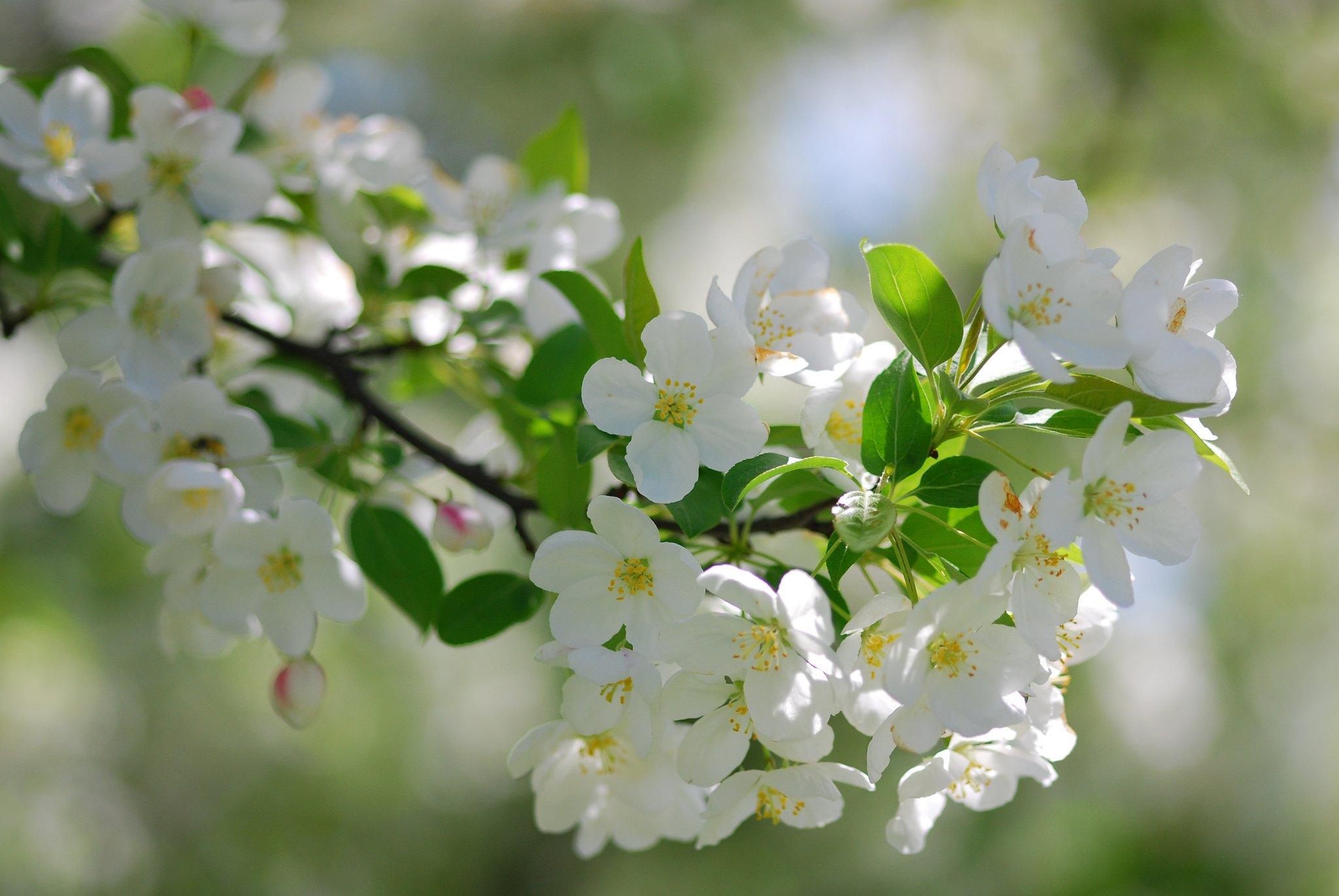 Открытки с яблоневым садом