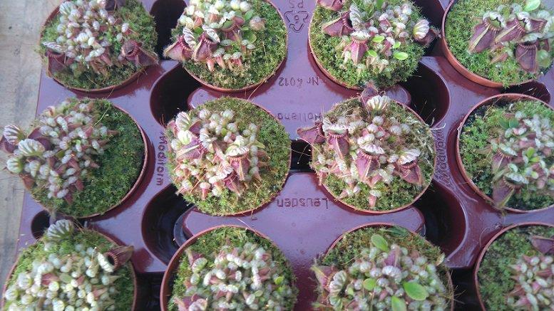 Tropical Nature: Advantages and disadvantages of plastic pots