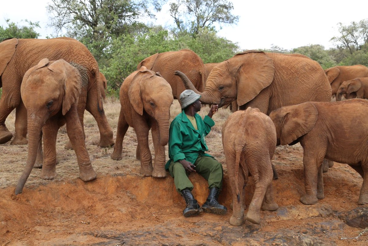 Its our responsibility to safeguard our #wildlife. RT if you agree #InOurHands @DSWT https://t.co/wzL3ekyhGO
