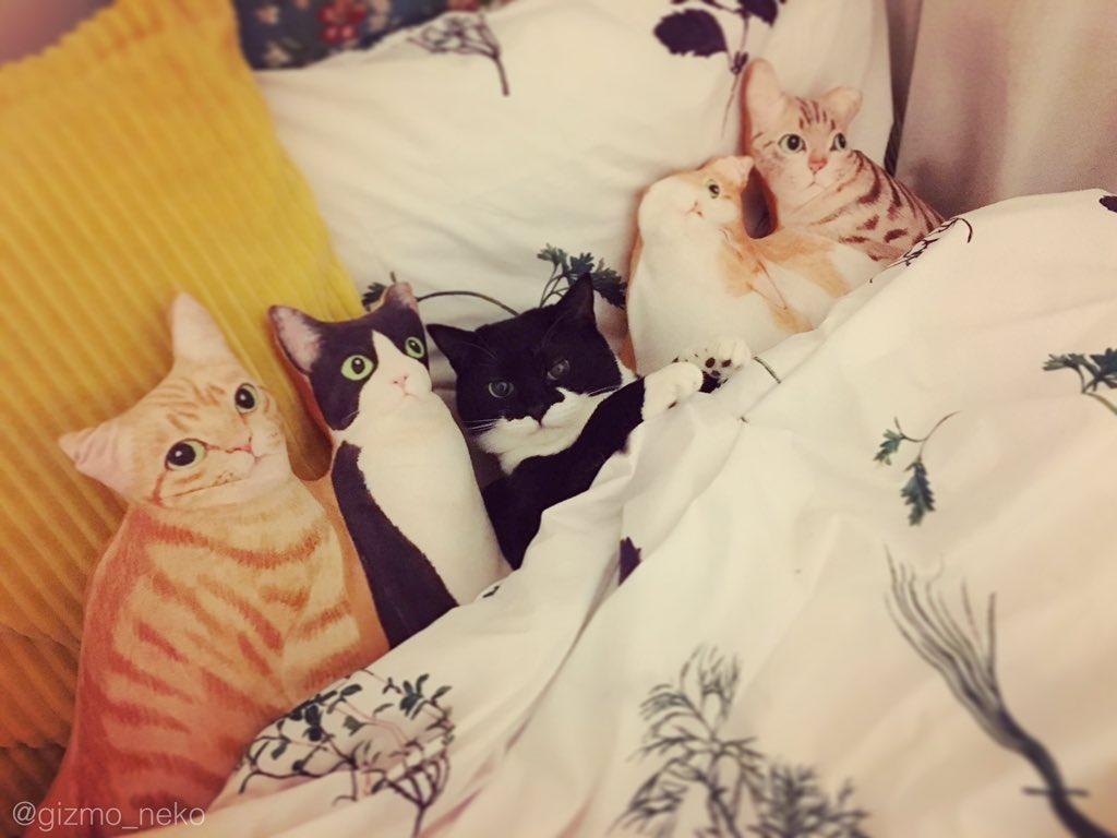 添い寝待ち+猫ハーレムクッション=('ω')うわああああああ pic.twitter.com/cx54XMnMrs