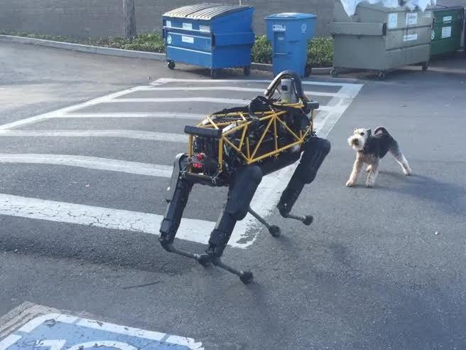Nell'immagine il robot con il cane vero nel cortile del parcheggio