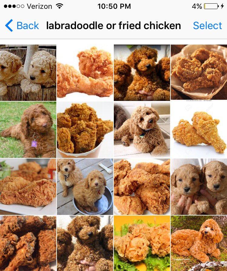 Anti Cgi Face Melt Karen On Twitter Labradoodle Or Fried