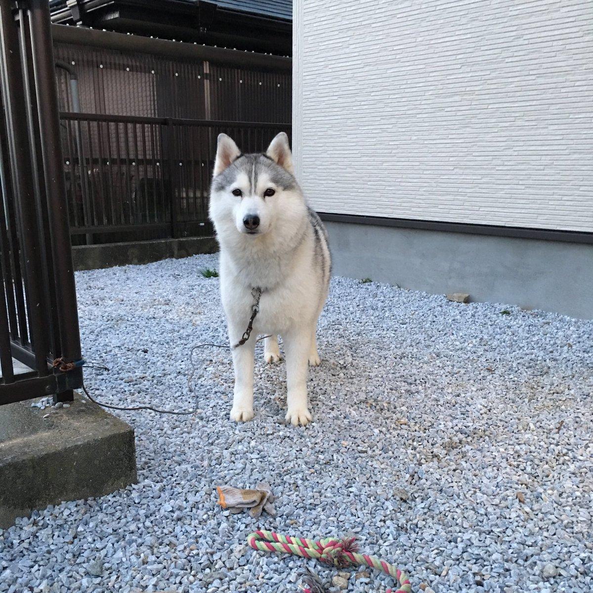 番犬できませんオーラすごい pic.twitter.com/ZZ6P4RNE8W