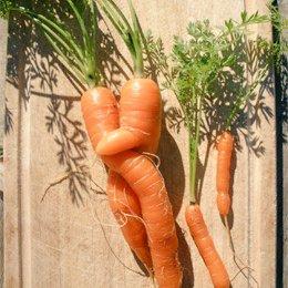 Cibi arancioni come le carote e rossi come i peperoni sono nostri alleati nella prevenzione del cancro