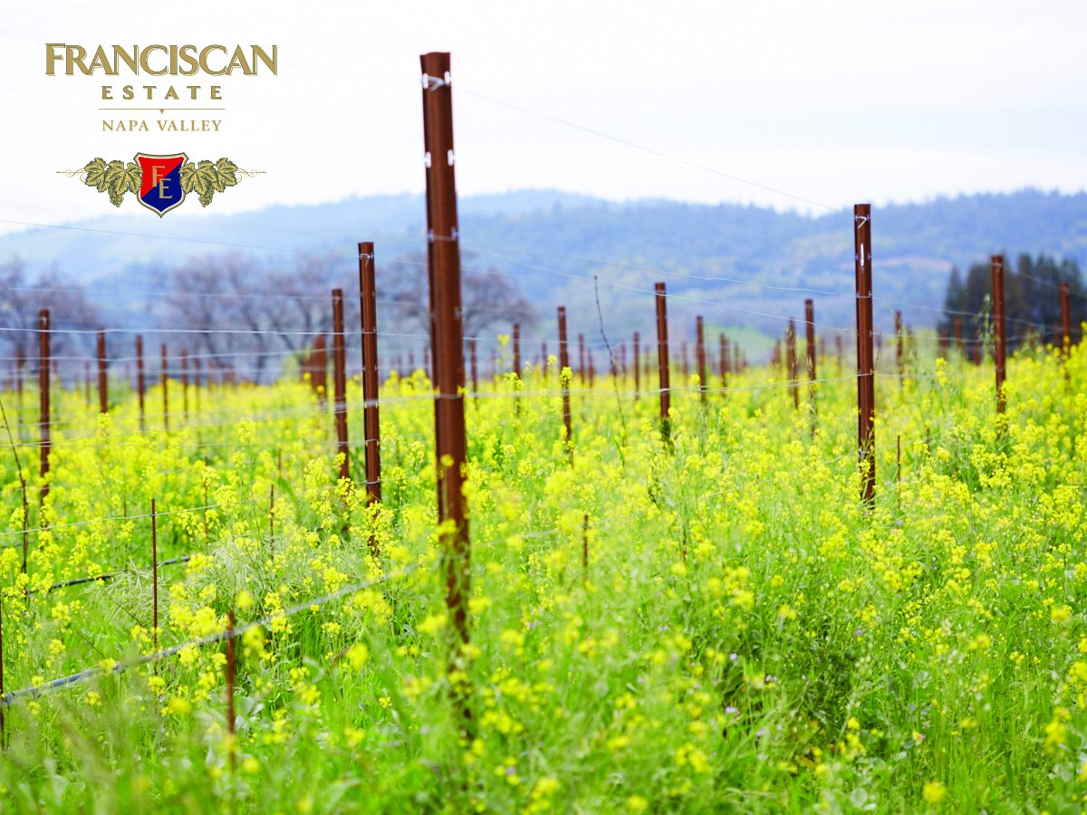 This time of year brings us yellow-lined vineyard rows.  Come see them yourself: https://t.co/un6b05A1IN https://t.co/IZueTzsYJX