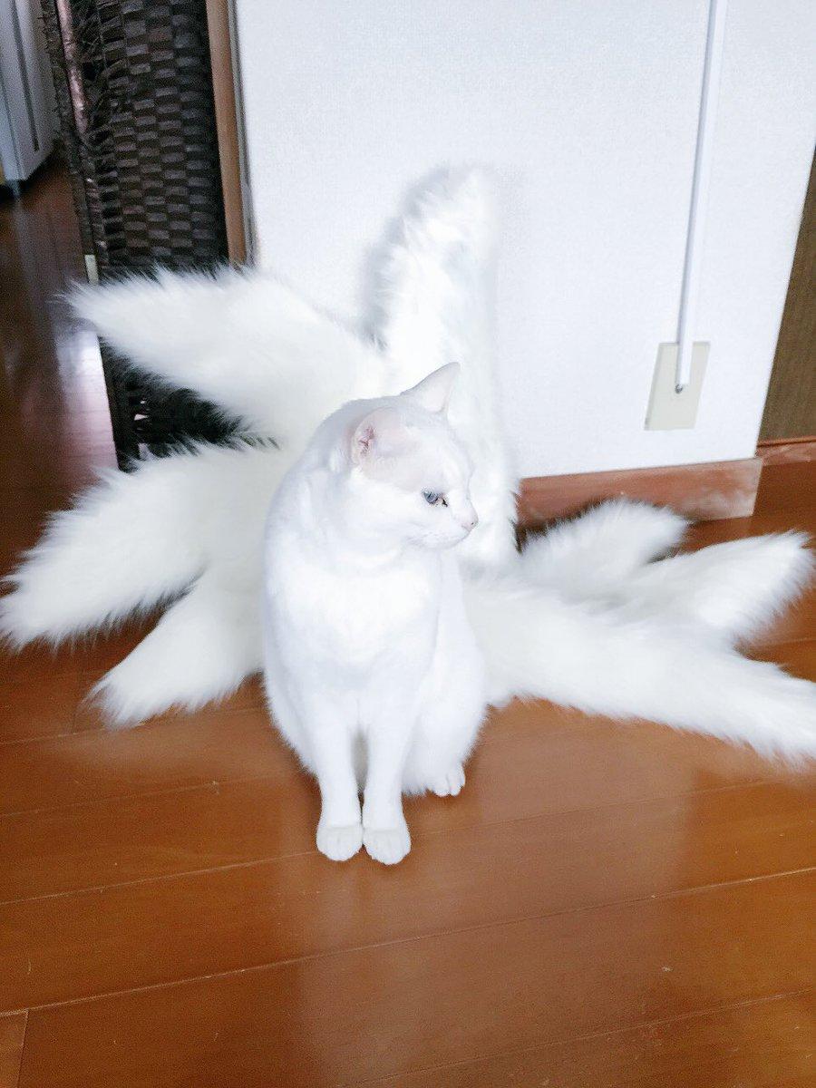 九尾の狐の尻尾 だいぶ出来てきた(またまだ途中だけど)ฅ^•ﻌ•^ฅ   いろいろやってたら ぶーさ…