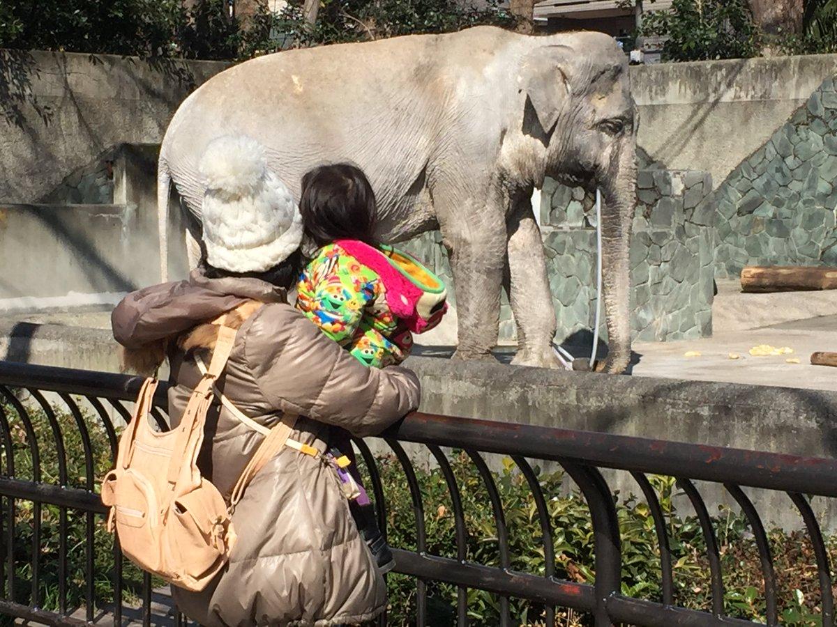 Crowdfunding per Hanako, l'elefante dello Zoo di Tokyo