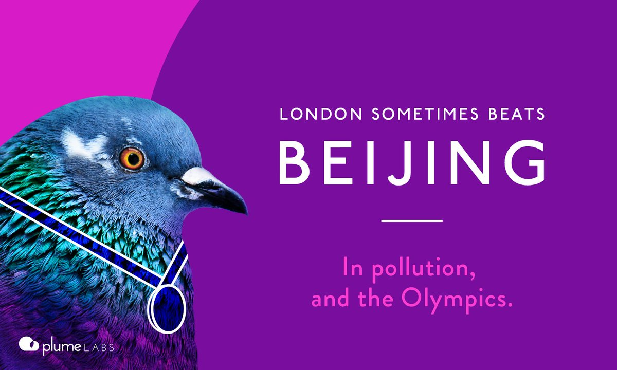 Pigeons Wearing Tiny Backpacks are Tweeting about London's Air Pollution