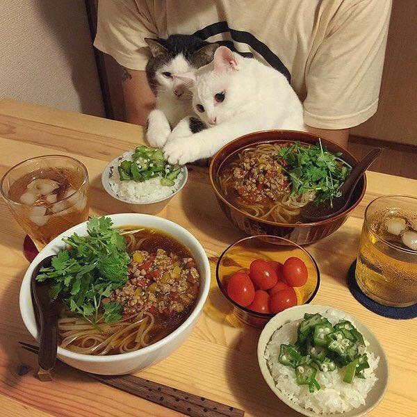 猫にとっても飯テロ?料理によってリアクションが違う猫www