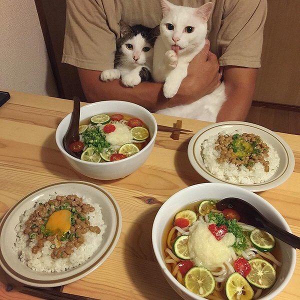 出される料理によって違うリアクションをとってくれる猫ちゃんが可愛すぎて俺の中で話題いに