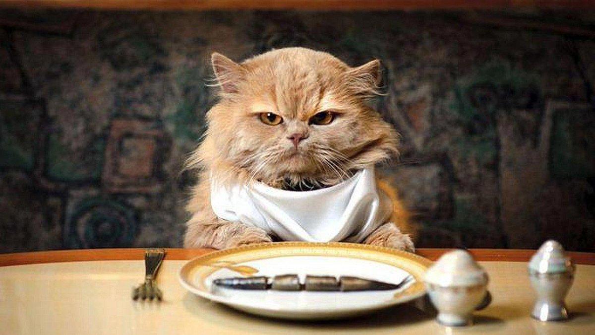 Картинка жующий кот