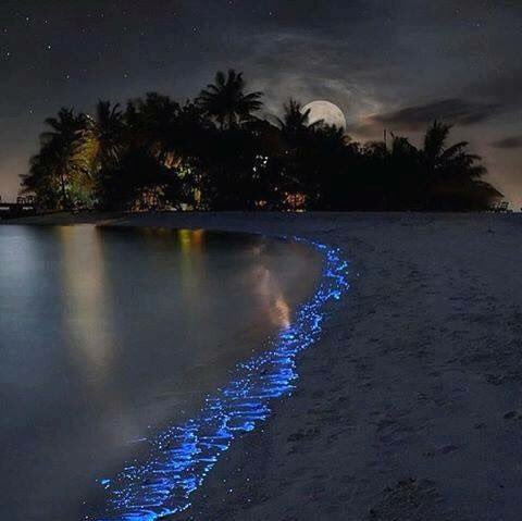Aeroceaniamv On Twitter Bioluminescent Plankton Trick Of Nature Turns Maldives Beach Into Glowing Sea Stars Paradiseonearth Https T Co 7qfwfwjlgh
