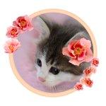 Image for the Tweet beginning: 花のフレーム等販売始めました。よろしくお願いいたします。イラスト素材 PIXTA   #frame