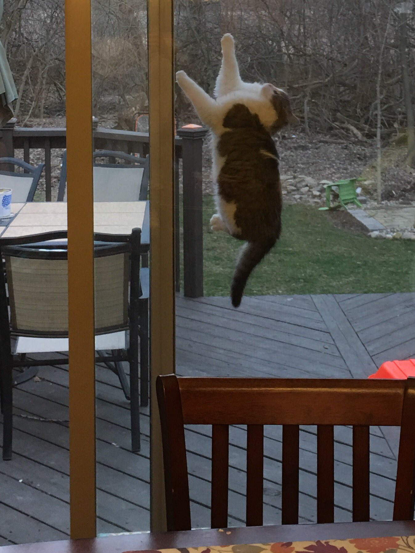 Dylan on twitter my cat got stuck between the glass door and the dylan on twitter my cat got stuck between the glass door and the screen door im crying httpst19tsdrfe9c planetlyrics Image collections