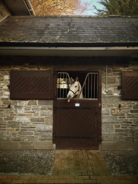 Was stalking the @clementstable FB & came across a great pic @FionaCraig00 took of Discreet Marq at @MoyglareStud https://t.co/EK1iCo8Db7