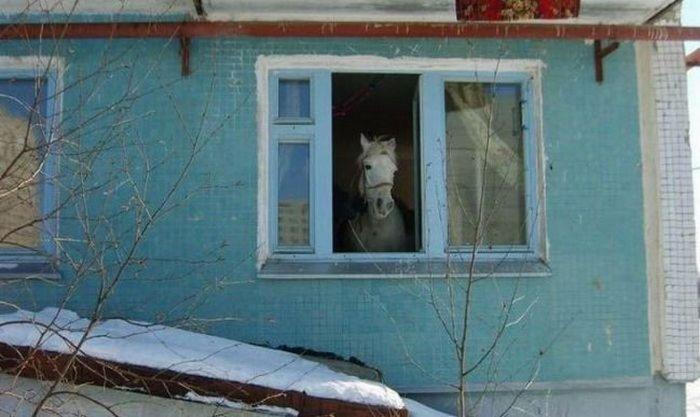 Переговоры об обмене Савченко не велись и не ведутся, - МИД РФ - Цензор.НЕТ 6168