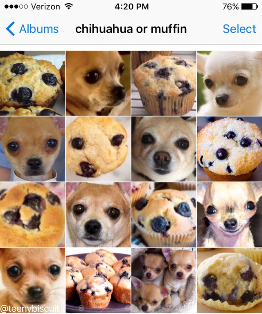 Have You Ever Noticed Chihuahuas Look Exactly Like Blueberry Muffins