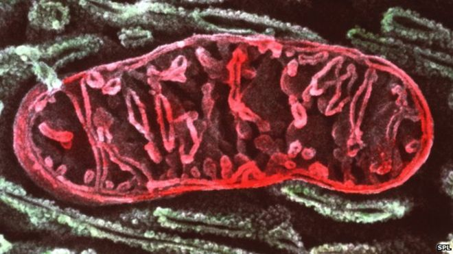 ME Association to fund fourth study into the role of the mitochondria in ME/CFS | 10… https://t.co/lPGDzs7vNw https://t.co/BdcUFZ4eRd