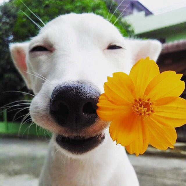 dogs with flowers (@dogswflowers) | Twitter