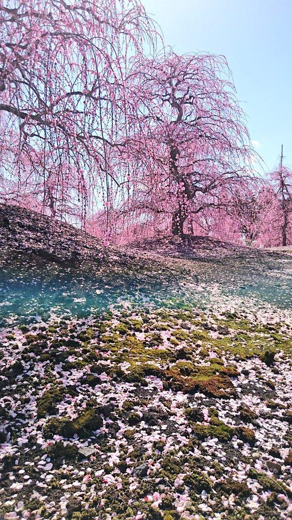 梅が力強くてしなやかに見えるのは地面の強さもあるのかも。淡く輝く苔の緑。 https://t.co/EolGBJvjw9