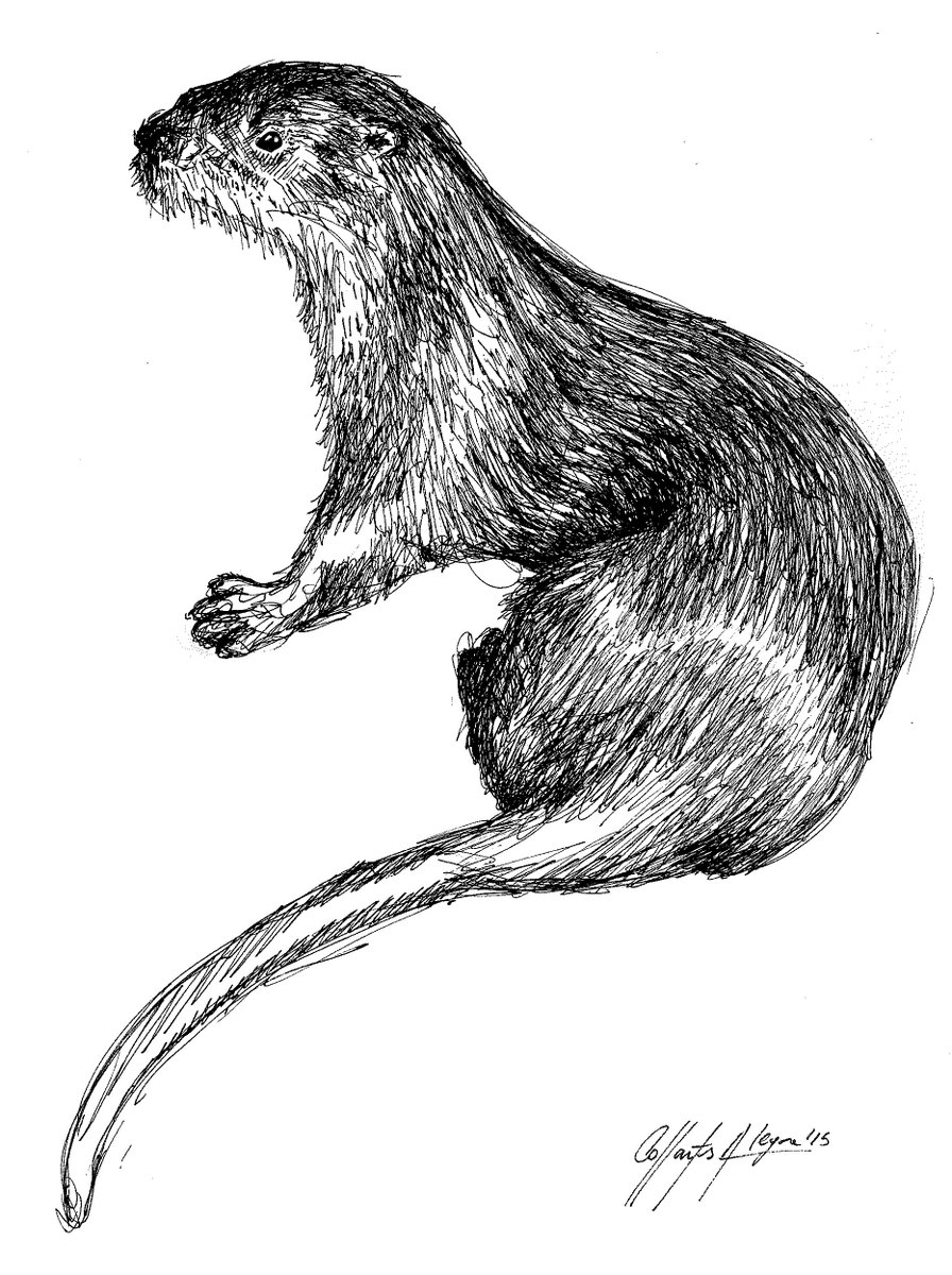 Fauna Ilustrada on Twitter: \
