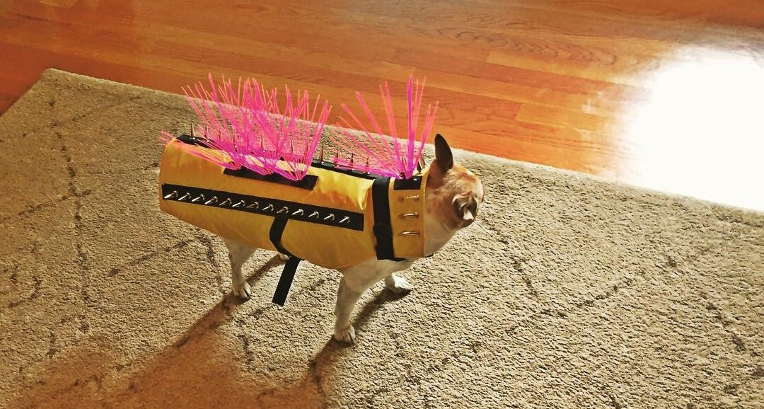 Tracy Hinson On Twitter Quot Check Out This Stylish New Dog