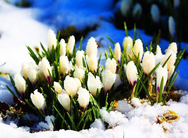 картинки ранней весны день рождения этой странице