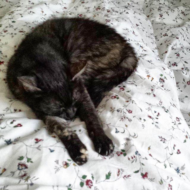 Napping Time 🐈🐱😍 #katzekuscheln #piepsi #homesweethome #myhome #wasmichglücklichmacht #ohilikeit #catstagram #catof… https://t.co/lO5XVTdwNE