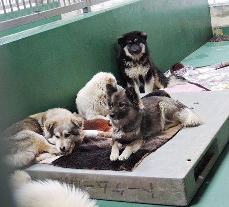 3/11 #茨城センター https://t.co/wJOmDCFgol 収容動物がない日はほとんどありません。 犬は多い時は1日に10頭も収容されることも。 懐いている子今日も沢山いました。ほとんどお声がかかっていないそうです https://t.co/VVtphjfnyV