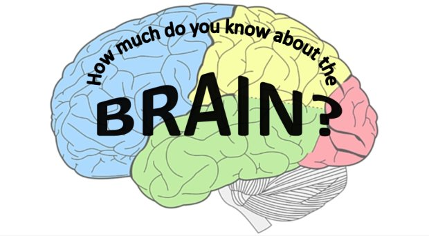 It's #BrainAwarenessWeek, so put yours to the test with our #Neuroscience research quiz: https://t.co/mzNdnIX3bM https://t.co/ENvTzVgYTs