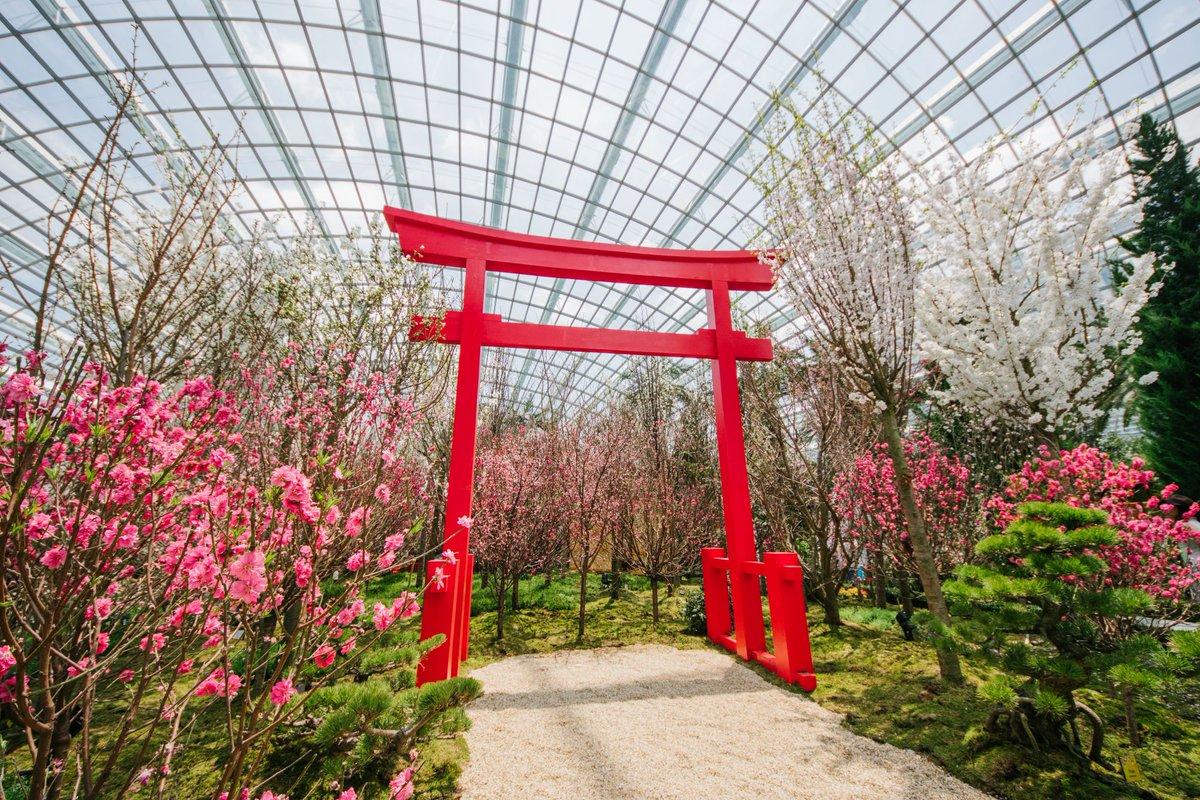 Sakura In Singapore At Gardens By The Bay