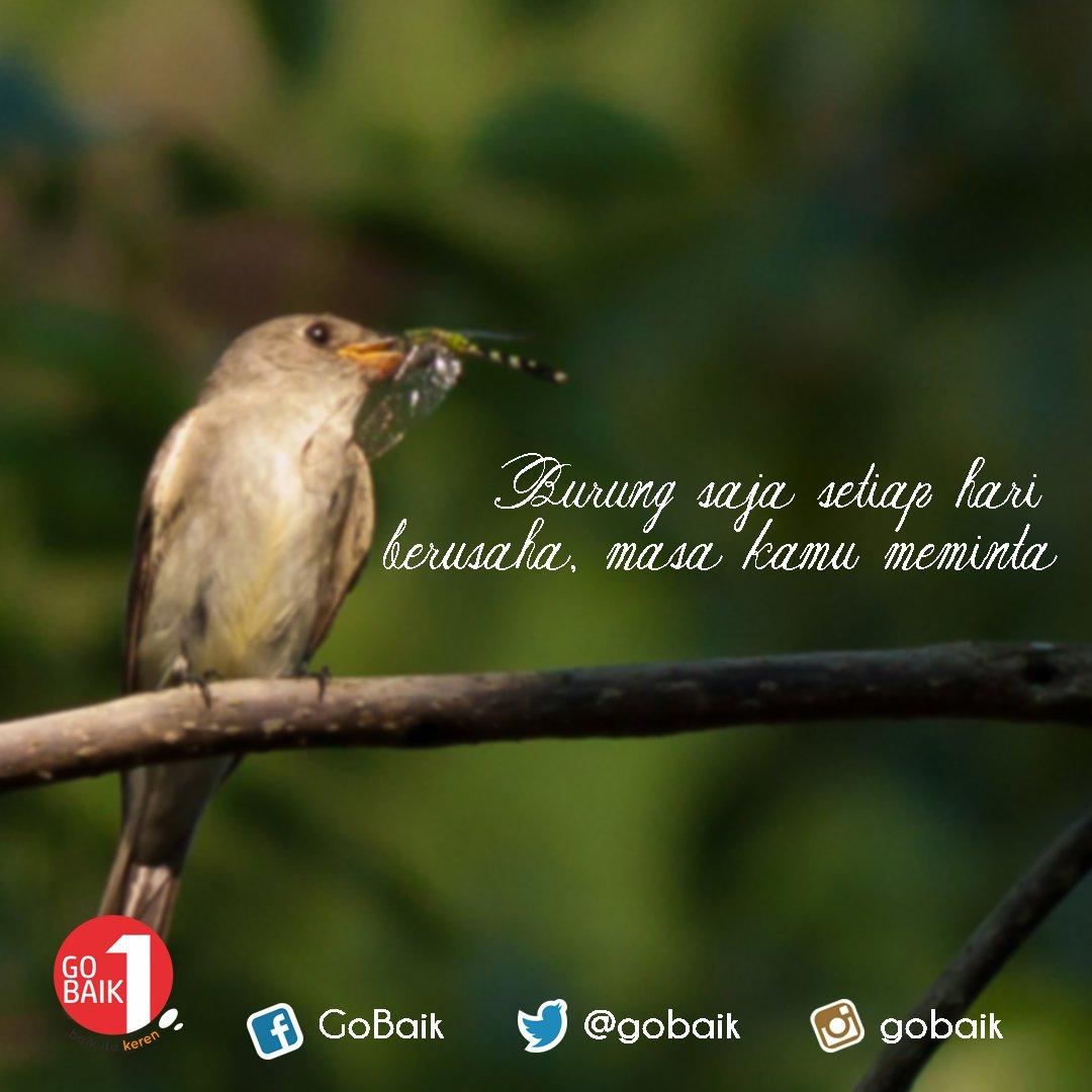 Paling Inspiratif Kata Kata Mutiara Burung Lovebird Maruf