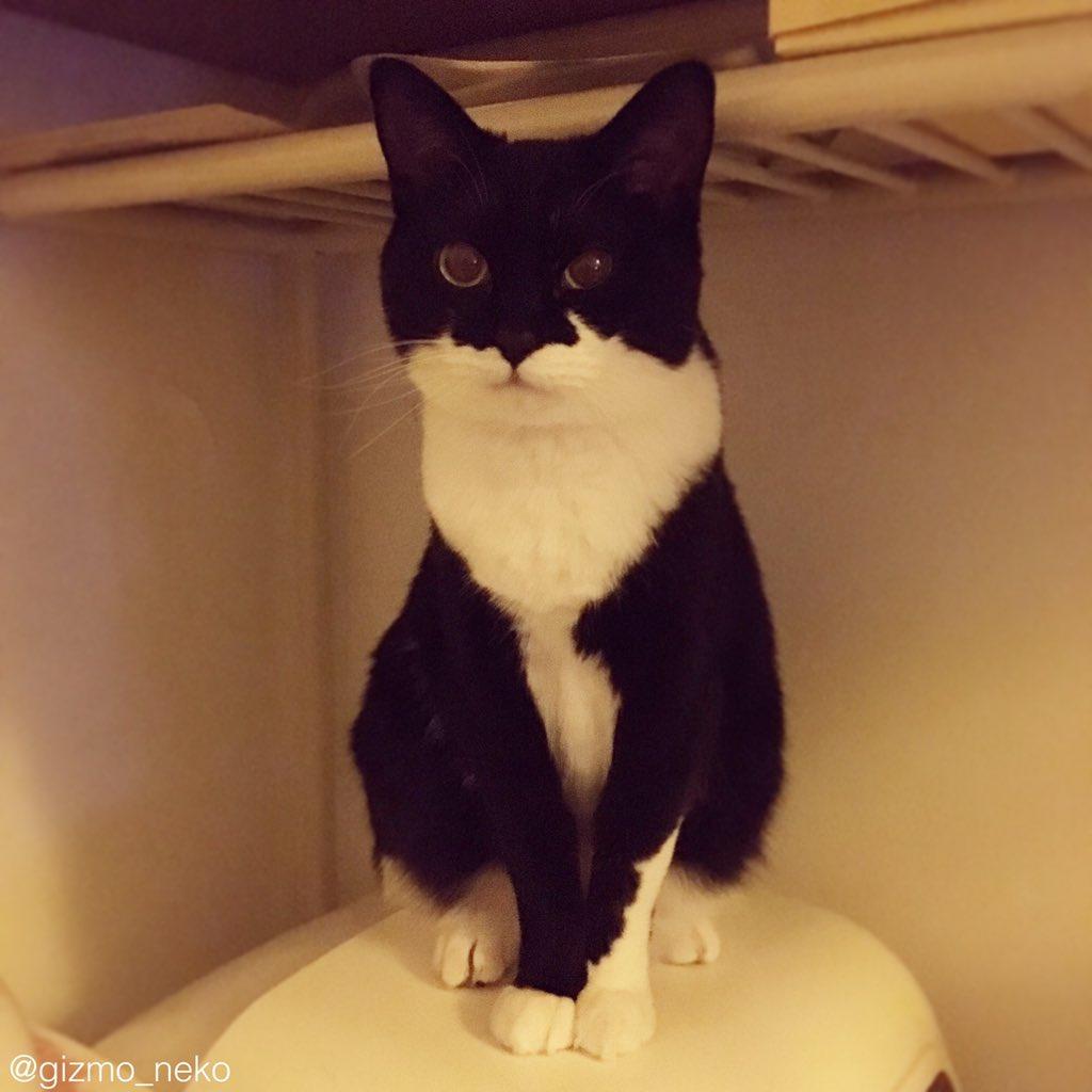 キメ顔するのはいいけどそこトイレの上やで pic.twitter.com/iX968MZUlk
