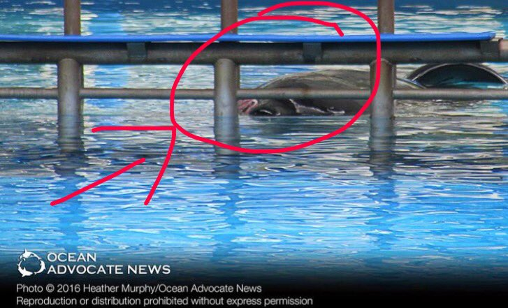 Dawn Brancheau Attack Footage Tilikum At Seaworld Re...