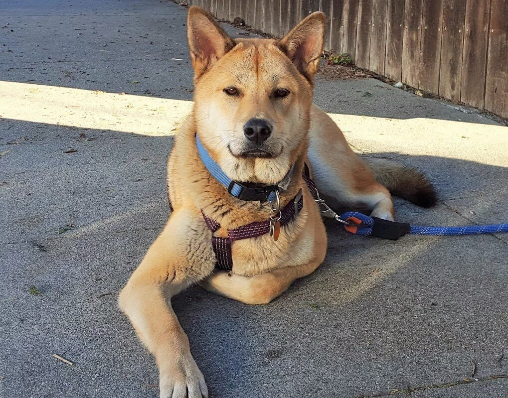 @HSIGlobal Thx for rescuing my Lio from South #Korea #dogmeat farm. He was on the March 17, 2015 flight @JoeyFotoFr https://t.co/Ld50IpGKDR