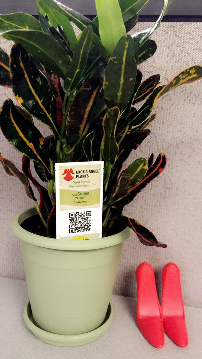 Missssa On Twitter Love My New Plant From Exotic Angel Plants