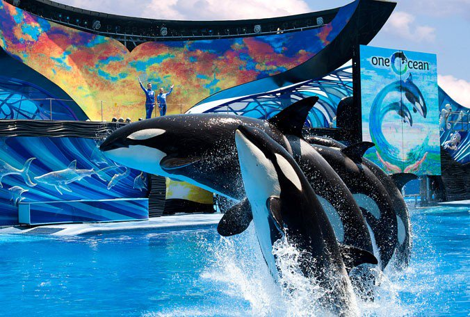 #SeaWorld ending #orca breeding. Killer whales currently at the parks will be the last. https://t.co/5lIRT6IY2X https://t.co/9KJxC9yoaA