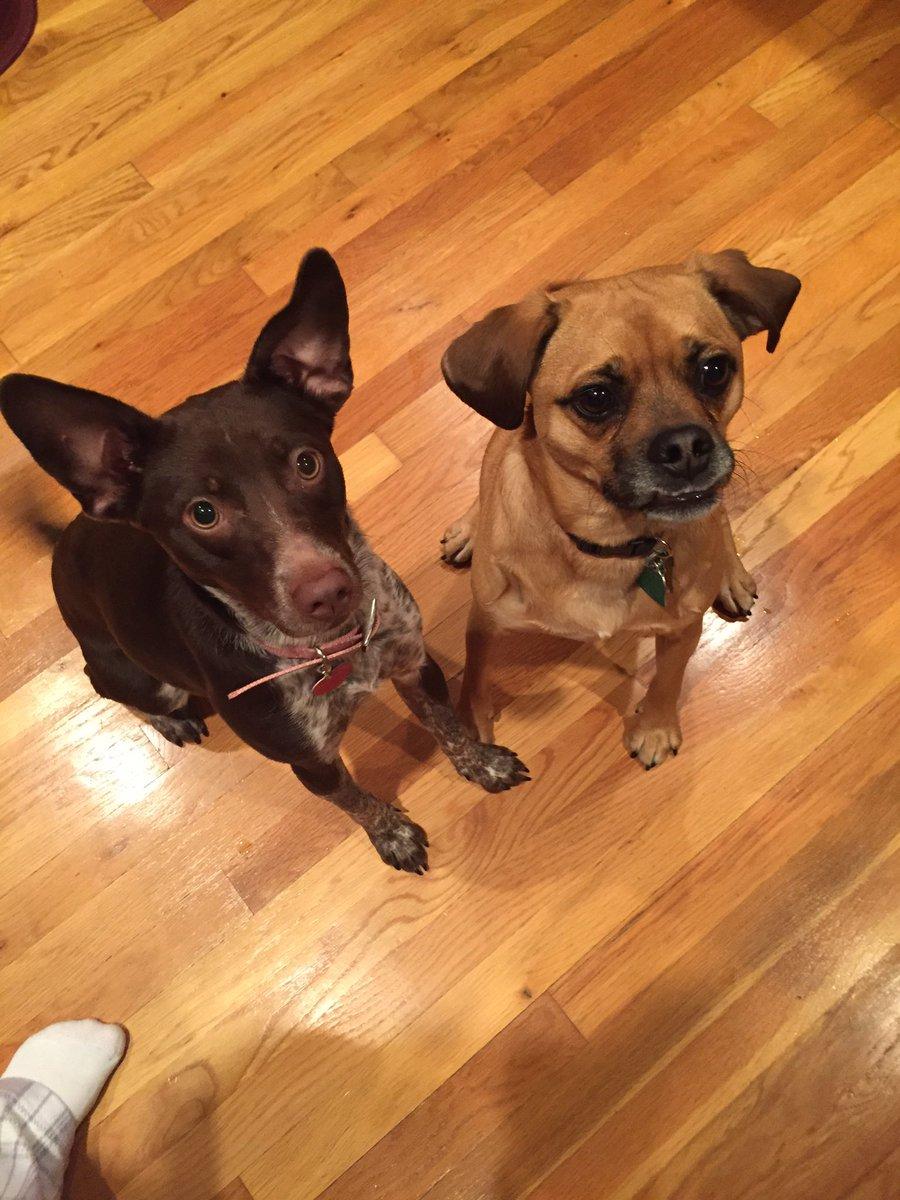 TDIH (3/17) 2016-Mr. Showman adopted a 4 legged friend, Lucy! #OTFalcons https://t.co/2fTvK1vwin
