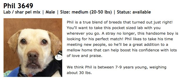 Please adopt this dog Phil from @Muttville - he's so great, sweet, docile. And if I had room, I'd take him. https://t.co/T1GX2efghW