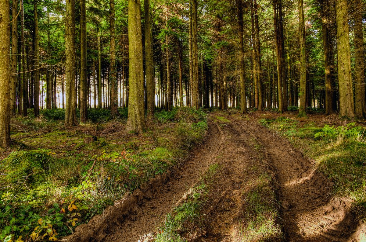 """peya on twitter: """"did you know? 27,000 trees are cut down each day"""