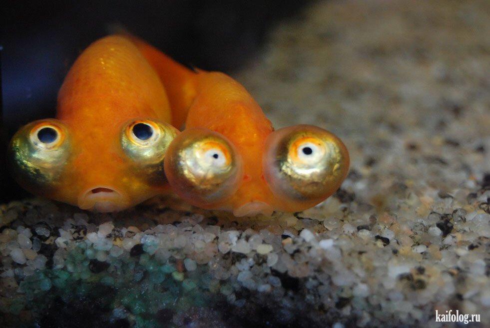 Рыба картинки с надписями, месяцев