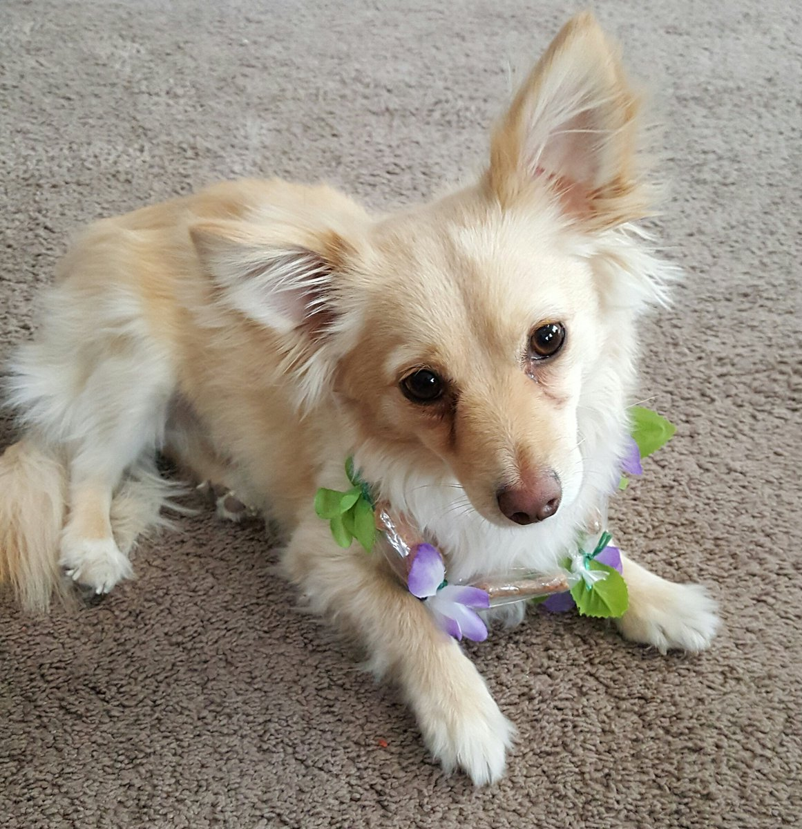 Meri Brown On Twitter I Got Mosby His Own Dog Treat Lei From Hawaii Yep I M That Person Mariahlian Https T Co X7tvaa3lk7 People ask me all the time why i. meri brown on twitter i got mosby his